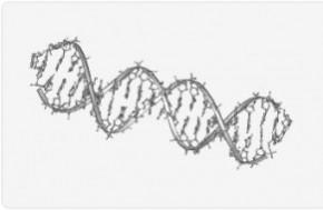 Salivary DNA Analysis