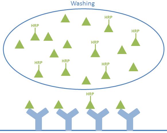 how-do-salimetrics-assays-work-2
